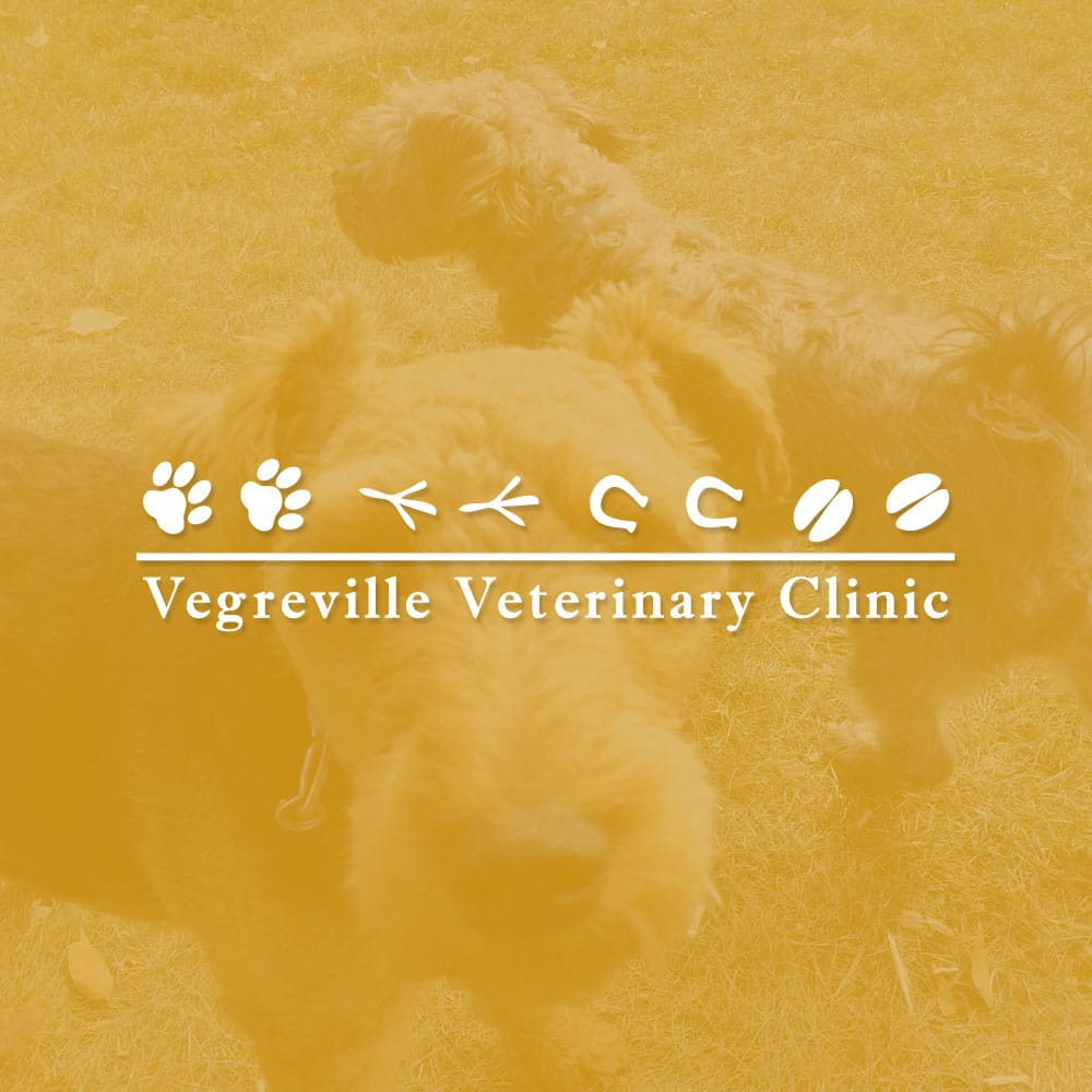 Website design SEO for Vegreville Veterinary Clinic - Veg Vet